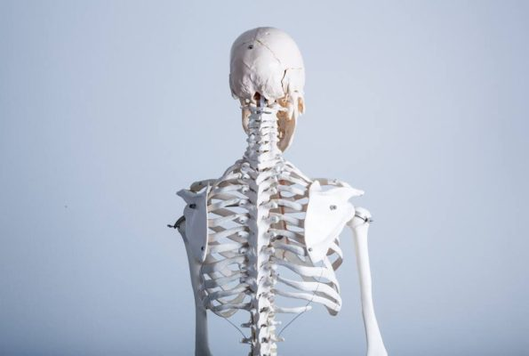 解剖学的ヨガ